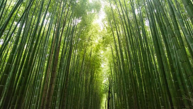 ilustrasi hutan bambu (Foto: unsplash/Mirko Blicke)