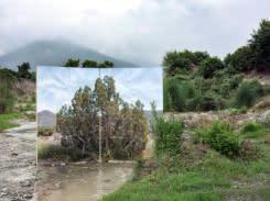 Dunia digambar ulang: fotografer Iran melihat peluang solidaritas