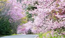 春節走春這樣玩!全台 10 大必玩走春景點推薦
