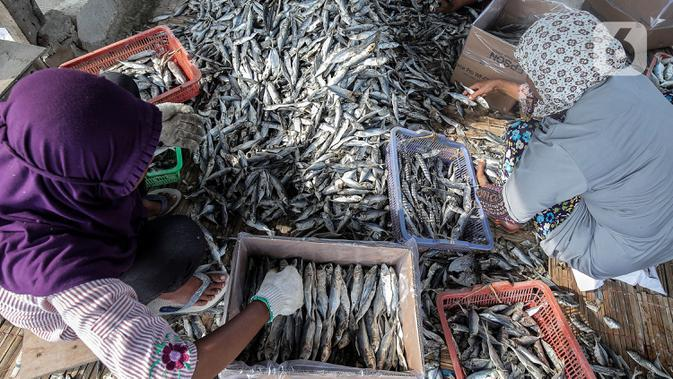Pekerja menyortir ikan asin di kawasan Kampung Nelayan Muara Angke, Penjaringan, Jakarta Utara, Selasa (29/9/2020). Harganya pun, mahal atau murah tergantung dengan jenis ikan yang dibutuhkan masyarakat. (Liputan6.com/Johan Tallo)