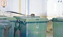 成棟有鼠只滅幾層 機電署大樓布鼠糞