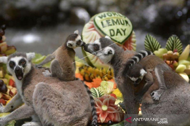 Bali Zoo tutup kunjungan wisata sementara antisipasi COVID-19