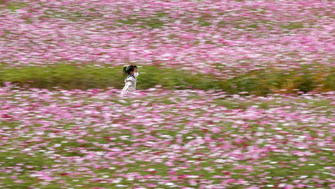 Seorang anak kecil yang mengenakan masker berjalan melintasi ladang bunga cosmos yang bermekaran di Paju, Korea Selatan pada 14 Oktober 2020. (AP Photo/Lee Jin-man)