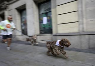 Mystery solved: Why dogs spin in circles before doing their business