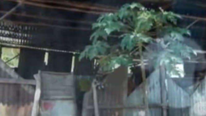 Keluarga Sitinjak dan Silaban Tinggal di Kandang Ayam di NTT, Sedih