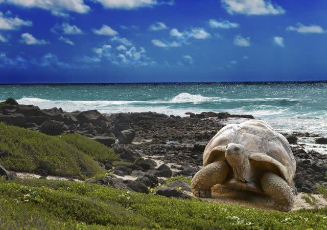 Turtles and tourists share the same beach on a Tunisian island