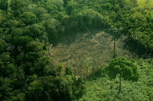 The Amazon is retreating to the tune of 52,000 square kilometres (20,000 square miles) each year as agriculture giants saw down trees to make way for vast tracts on which to graze cattle or grow plants
