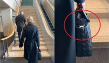 挺台!美駐聯大使帶「台灣黑熊」進聯合國 「總有一天,你也會站在這裡」