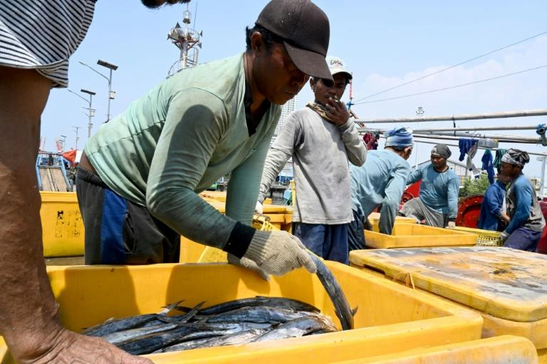 Indonesian fishermen unload their catch at the port in Jakarta