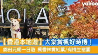 【香港本地遊】大棠賞楓好時機!錦田元朗一日遊 楓香林賞紅葉/有機生態園