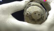 陸三星堆考古出土 3千年前陶豬撞臉憤怒鳥角色