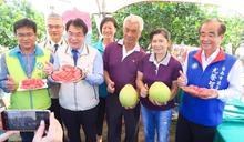 臺南紅柚鮮採上市歡迎全國鄉親及早訂購
