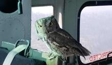 貓頭鷹飛進直升機「坐在副駕上」 盯視男子:好好救火喔!