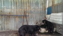 屏東私人飼養台灣黑熊 送北高動物園(1) (圖)