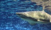 愛妻遭鯊魚攻擊 澳男子揮拳擊退