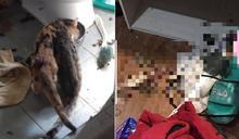 8貓關空屋棄養數週 餓成皮包骨「啃同伴屍維生」