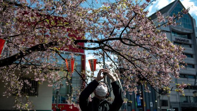 Seorang pria mengenakan masker mengambil gambar pohon sakura di taman Ueno di Tokyo, Jepang (12/3/2020). Di tengah kekhawatiran akan penyebaran virus corona COVID-19, ahli meteorologi memprediksi bunga sakura mulai mekar sekitar 17 Maret di Tokyo. (AFP/Philip Fong)