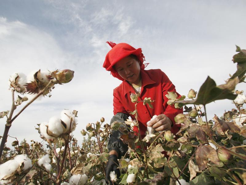 產品上游恐為新疆棉花 西方公司趕緊滅火