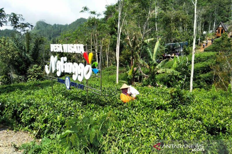 Cegah corona, 5 objek wisata berbasis masyarakat di Kulon Progo tutup