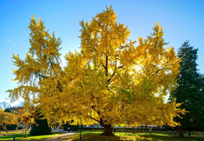 Ilmuwan jelaskan mengapa sejumlah pohon bisa mencapai usia 1.000 tahun