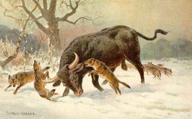 موسوعة ( الحيوانات مهددة الإنقراض )  Long_horned_european_wild_ox