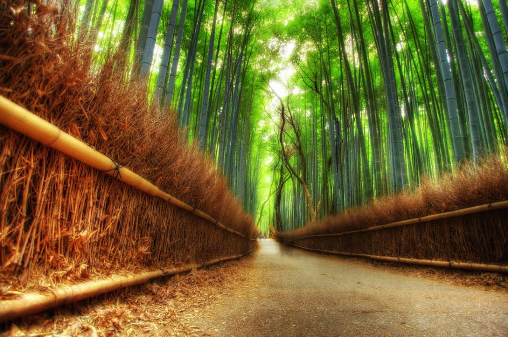 ����� ������� Bamboo-forest-1024x6