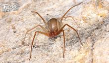 女遭劇毒蜘蛛狠咬 傷口慘潰爛腿上驚見「無底黑洞」
