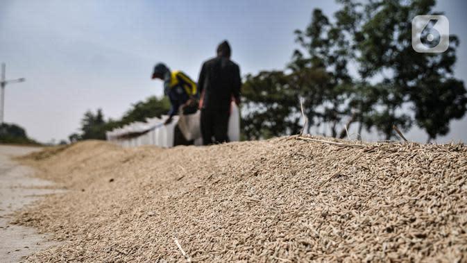 Petani saat menjemur padi usai dipanen di persawahan kawasan Rorotan, Jakarta, Rabu (29/7/2020). Direktur Utama Perum Bulog Budi Waseso mengatakan cadangan beras pemerintah (CBP) mencapai 1,4 juta ton beras. (merdeka.com/Iqbal S. Nugroho)
