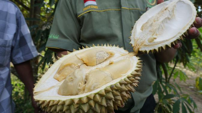Ternyata Durian Montong Buah Asli Indonesia