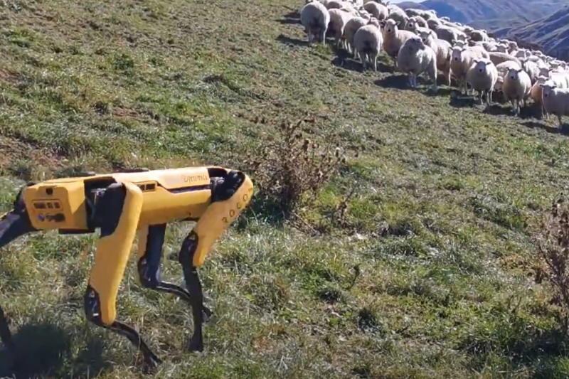 Digital Trends Live: Facebook opens Shops, Josh Radnor, robot sheepdogs