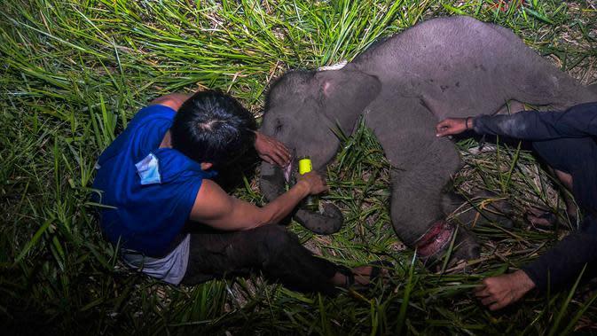Misteri Bangkai Gajah di Lahan Konsesi PT Arara Abadi Riau
