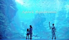 桃園高鐵景點》北部最大Xpark水族館、國王企鵝玩雪溜滑梯、多媒體海底世界