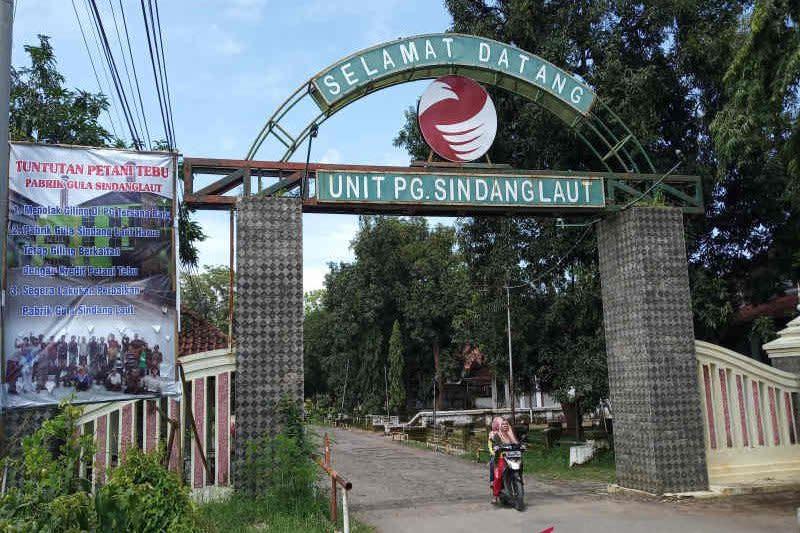 Petani tebu berharap Pabrik Gula Sindanglaut Cirebon tetap beroperasi