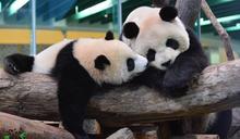 台北市立動物園教您 動物如何表現心情