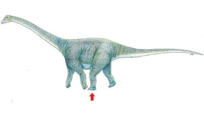 Ilustrasi dinosaurus yang diperkirakan meninggalkan jejak kaki di Gurun Gobi (Okayama University of Science)