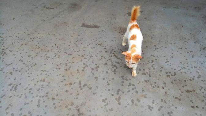 Warga Menteng Dalam Lomba Tangkap Kucing Liar di Tengah Wabah Corona, Ada Apa?