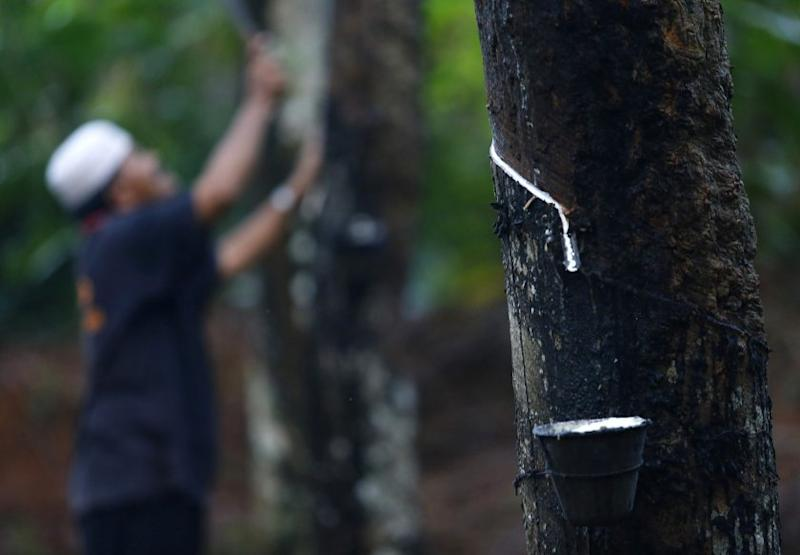 Ahmad Nazlan said MRB has deemed research projects to be important as they could help add value to the rubber industry in Malaysia by increasing revenue and exploring new avenues to benefit the country from the upstream (rubber plantation), midstream (rubber processing) and downstream (rubber product manufacturing) sectors. — Reuters pic