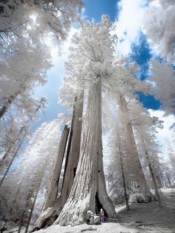 Hasil Foto Unik Infrared Photography (sumber: Instagaram/@earthfervor)