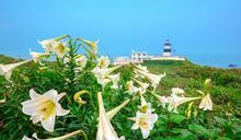 北海岸白色號角 吹響春季之聲