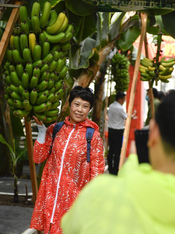 Seorang wisatawan berfoto di samping pohon pisang di rumah kaca buah-buahan tropis di Wanchang, Wilayah Yongji, yang terletak di Kota Jilin, Provinsi Jilin, China timur laut (12/8/2020). (Xinhua/Xu Chang)