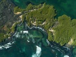 Ilmuwan temukan 30 spesies baru di kedalaman Galapagos