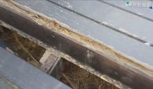 「龍騰斷橋」好危險! 木棧樓梯殘破露鐵釘