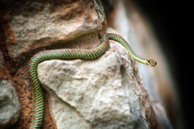 June 30: flying snakes top Google's tech and science Search trends