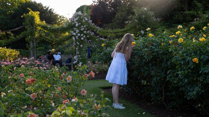Anak perempuan mencium bunga-bunga mawar di Taman Bunga Ratu Mary di Regent's Park di London pada 25 Juni 2020. Inggris pada Kamis (25/6) mengalami hari terpanasnya tahun ini hingga sejauh ini, dengan suhu mencapai 33,3 derajat Celsius di Bandara Heathrow, menurut badan meteorologi. (Xinhua/Han Yan)