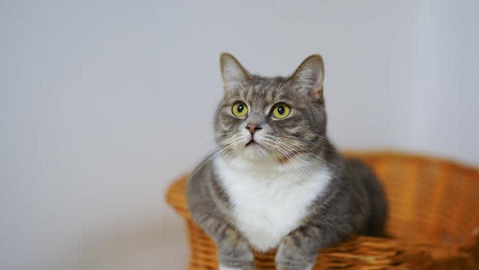 Ilustrasi Kucing | Credit: freepik.com