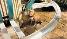 比特犬花博園區咬死貴賓狗 飼主初判被罰3萬元