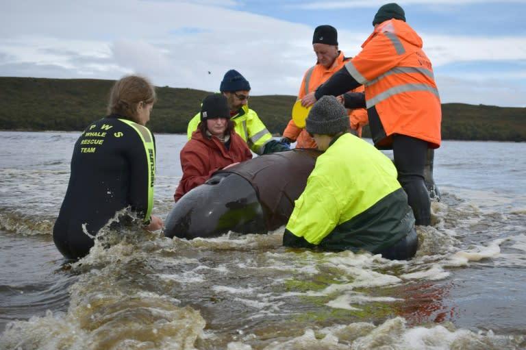 Final whale saved from grim Australia mass stranding