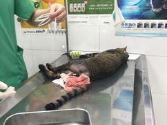 病在貓身 ‧ 痛在少年心