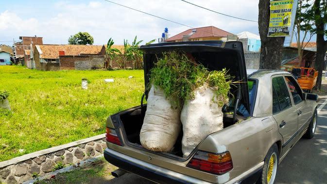 Mobil sedan e 300 classic berwarna silver, nampak gagah digunakan sebagai tunggan pembawa rumput salah satu peternak domba Garut,di Garut, Jawa Barat. (Liputan6.com/Jayadi Supriadin)