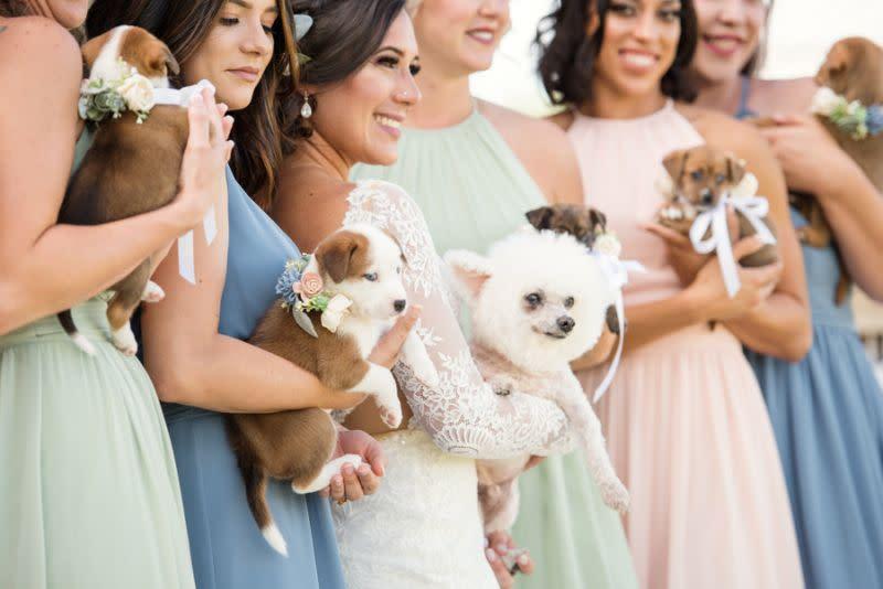 Pasangan pengantin mengganti buket bunga dengan anak anjing